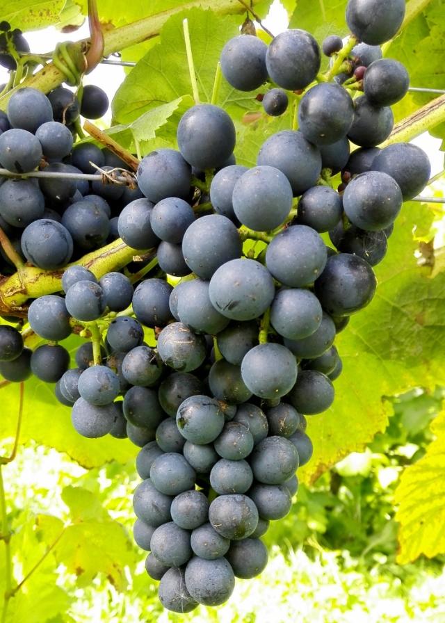 vin0001