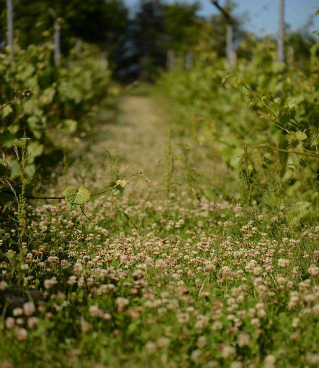 Falder temperaturen vil der stadig være pollen, men nektaren flyder kun i  varmen.